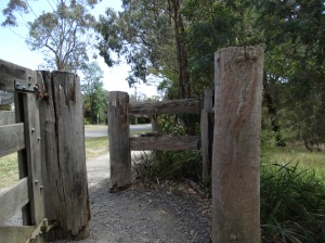 The fabulous post and rail fence that completely encircles my favourite Blackburn Lake Sanctuary