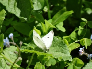Pretty flowers attract pretty butterflies and moths - not sure which this is, green leaves