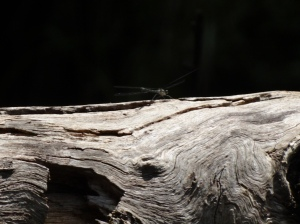 I was with an insect enthusiast today...and I think it's starting to show in my photos!, dead log