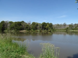 reflection, blue sky, Glorious glorious day! A lake on Monbulk Creek in Birdsland Reserve