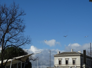 blue sky, silver gulls, court house