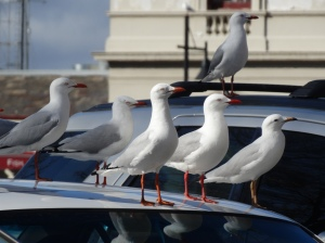 cars, blue sky, silver gull