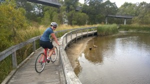 boardwalk, pond, rushes, bike